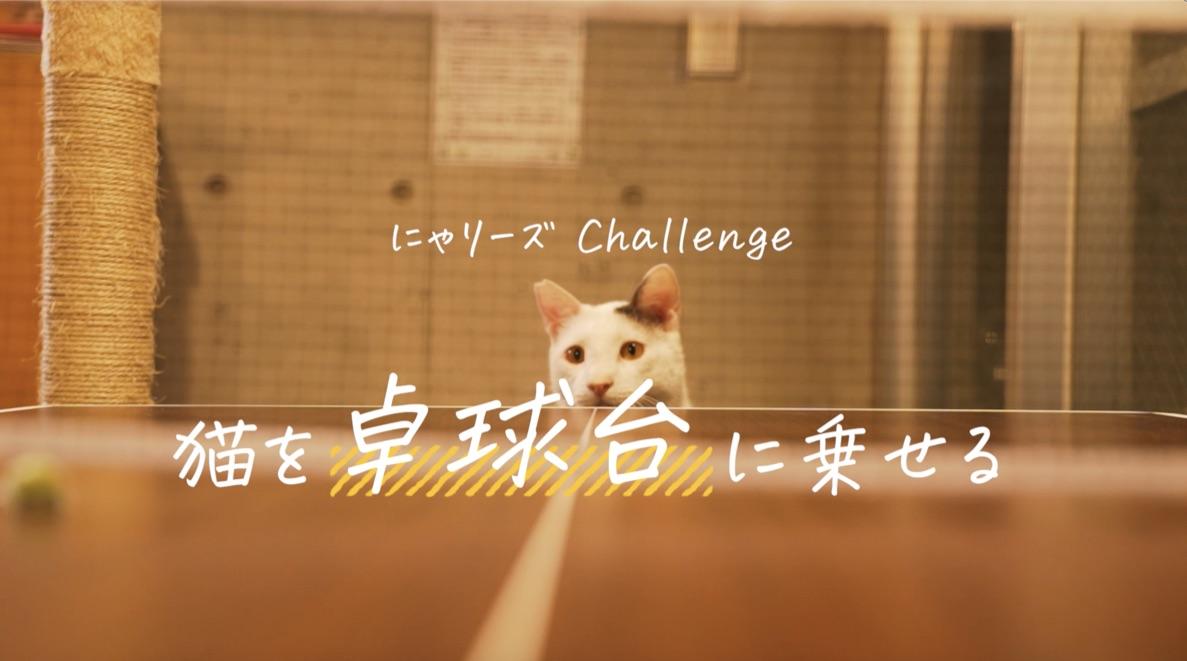 Rallys×猫=にゃリーズ