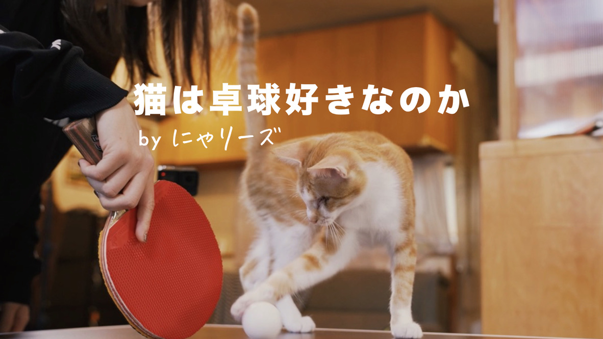 【新動画企画】Rallys × 猫=にゃリーズ 誕生。